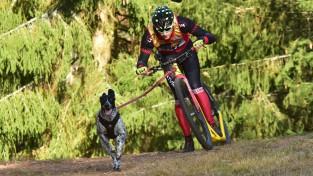 Latvijai sudrabs pasaules čempionātā kamanu suņu sportā
