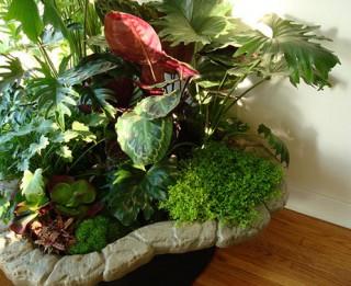 Uzzini kādi istabas augi uzlabo veselību un cīnās ar sliktajām enerģijām