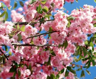 10 padomi, kā pievilināt pavasari