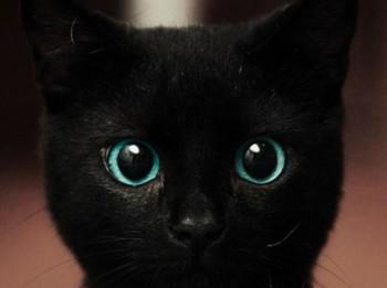 Foto: Ak, šie burvīgie un neparasti jaukie kaķi