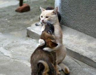 Foto: Ak, šie burvīgie un neparasti kaķi
