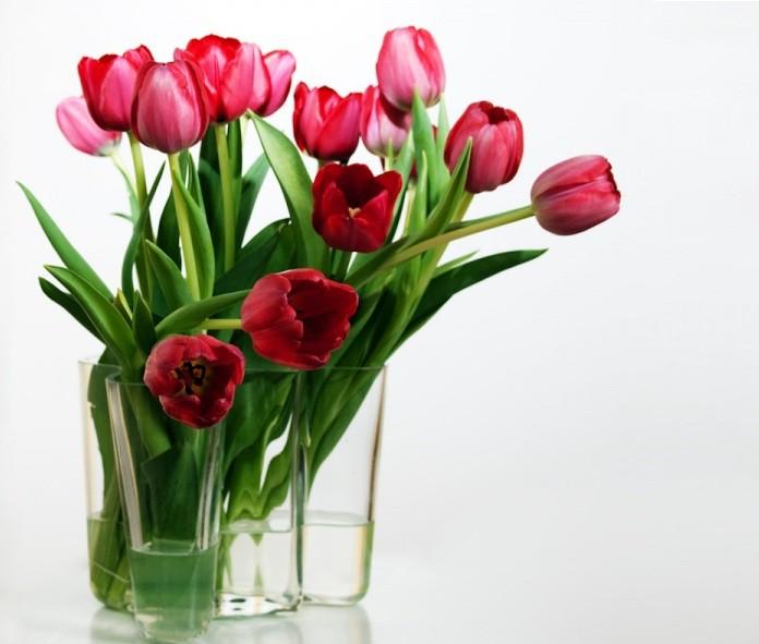 Vārdu skaidrojums. 10. aprīlis – Anita, Anitra, Annika, Zīle